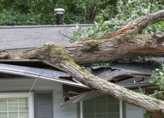 roof damage - tree on roof